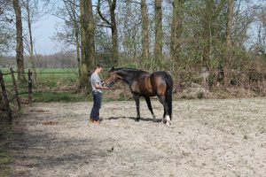 paardentherapie