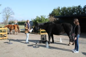 Paardencoaching Zwolle